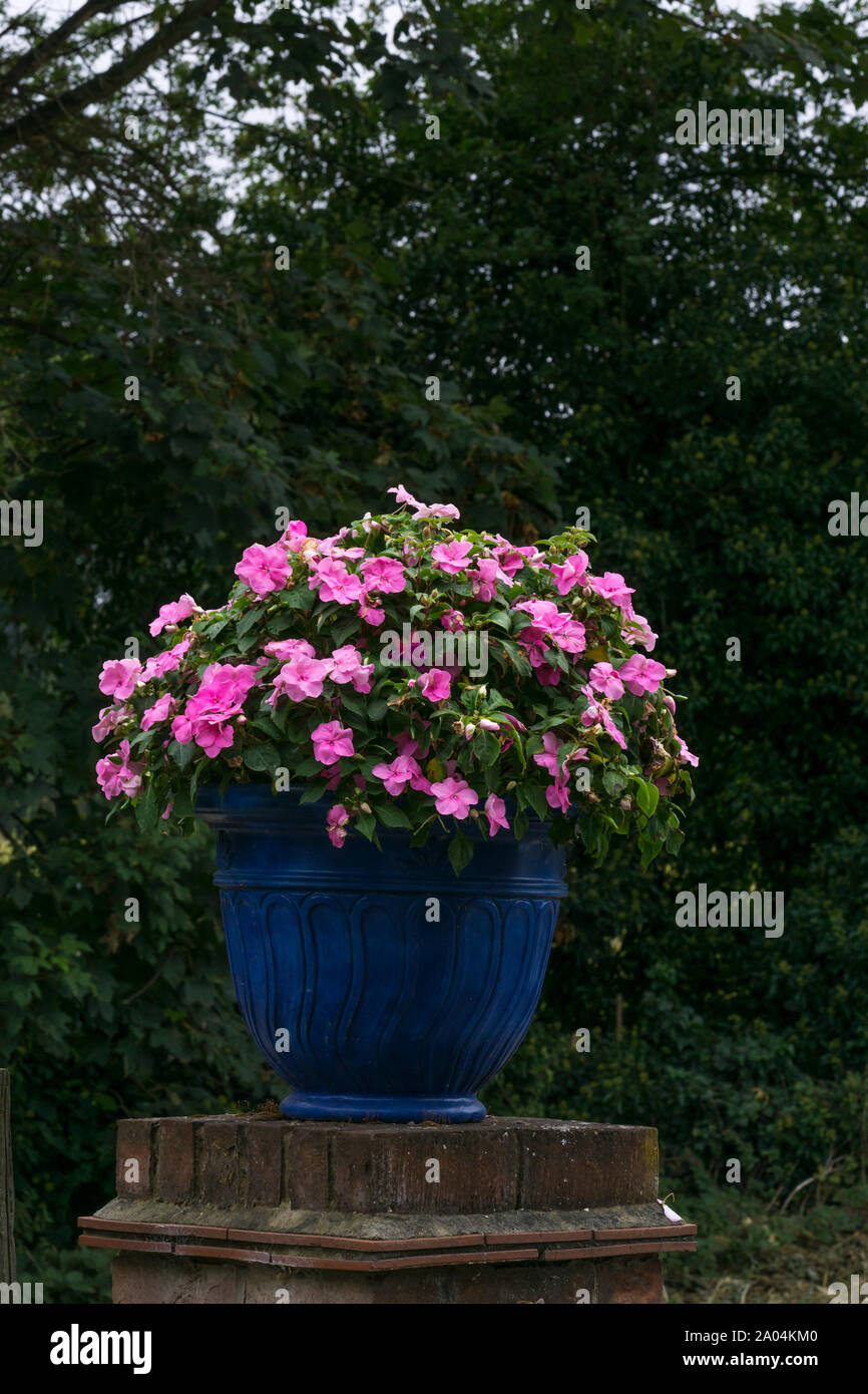 Blue planter pot on brick gatepost with pink flowers Stock Photo