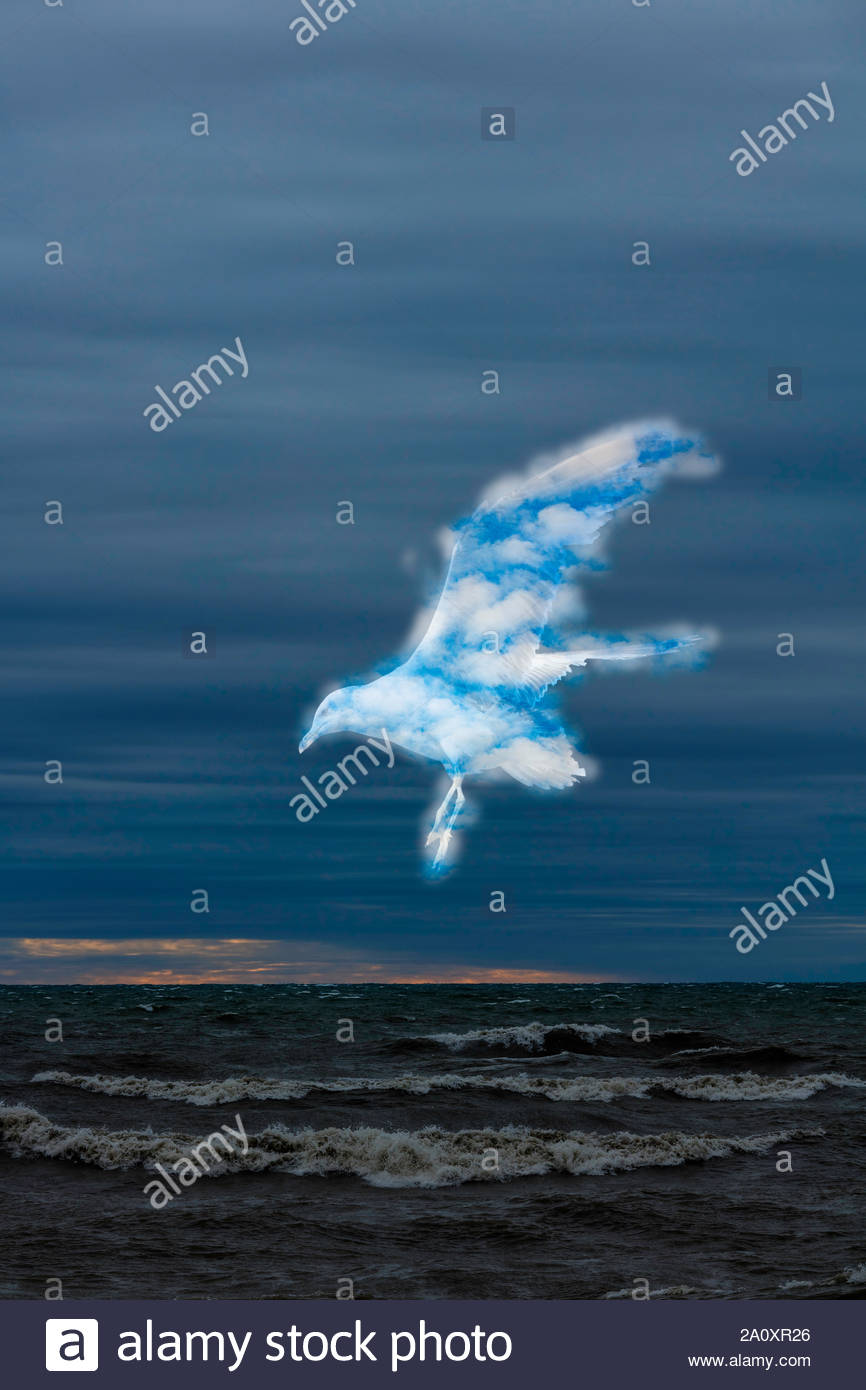 surreal-surrealism-cloud-bird-weather-ov