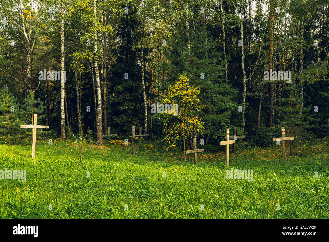 Forest and Crosses at Mass Grave in Kurapaty, near Minsk, Belarus. Place of Mass Executions During Great Purge by NKVD Stock Photo