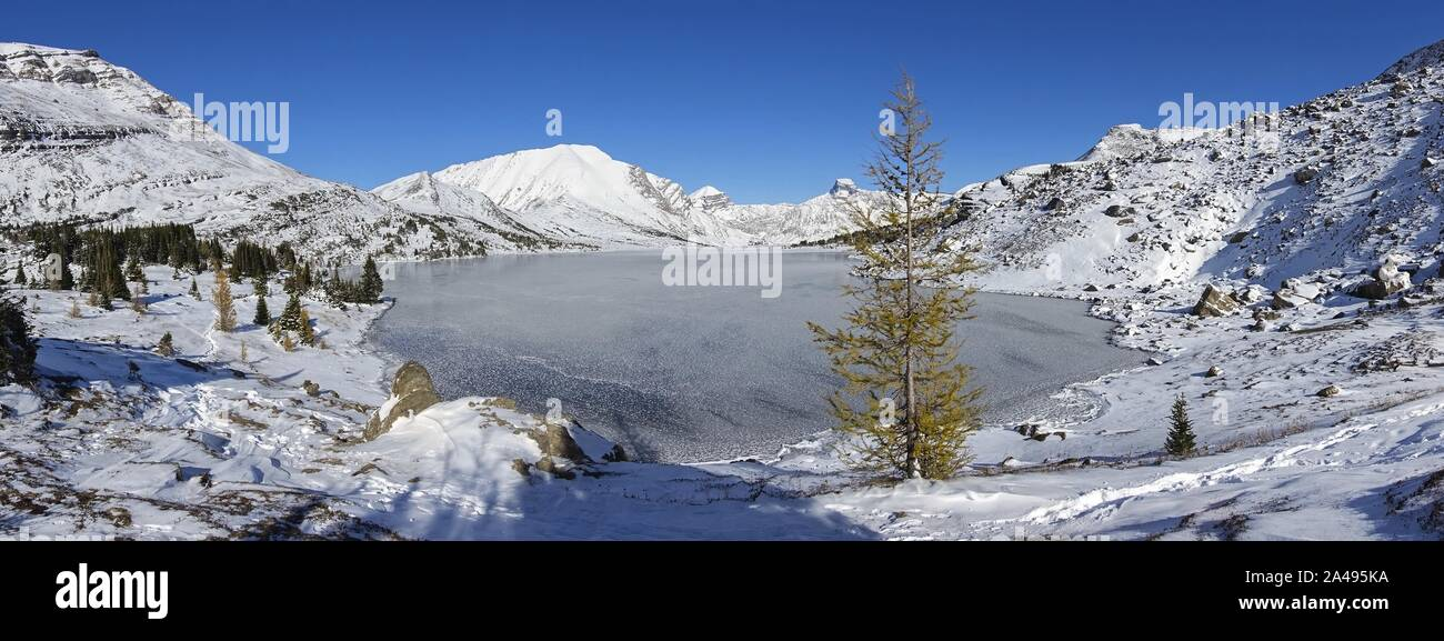 isolated-larch-tree-frozen-mountain-lake