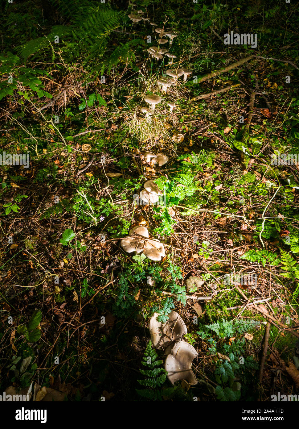 trail-of-fungus-in-forest-floor-in-woodl