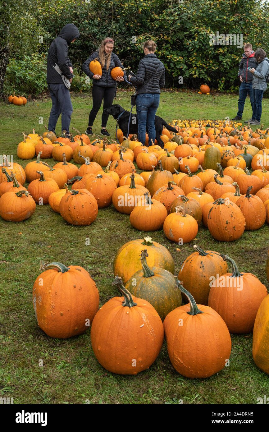 halloween-pumpkins-for-sale-outside-on-the-grass-at-a-village-show-2A4DRN5.jpg