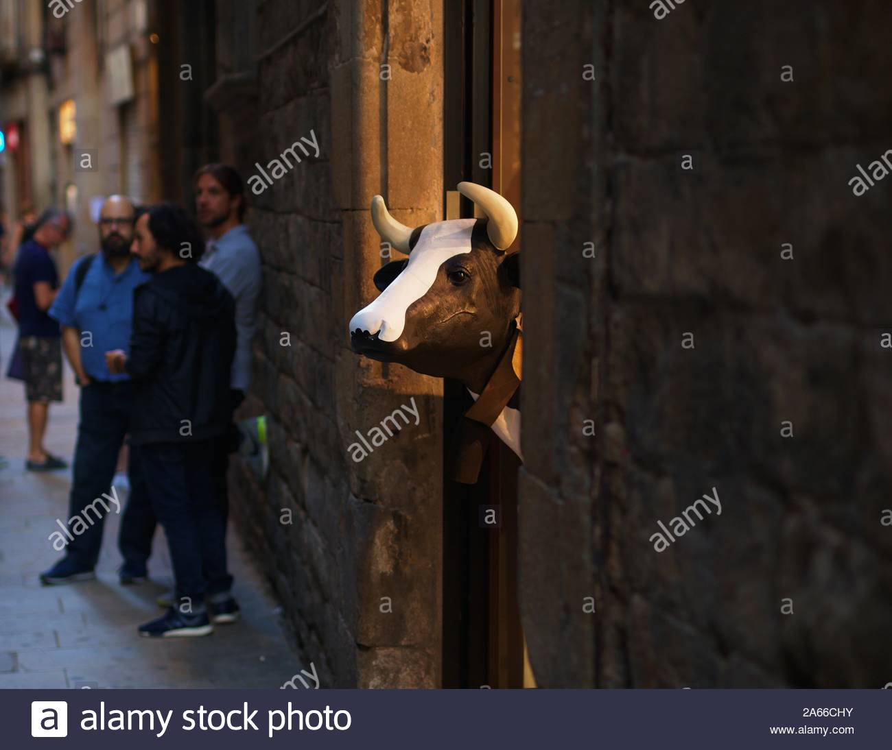 cow-looking-out-from-shop-2A66CHY.jpg