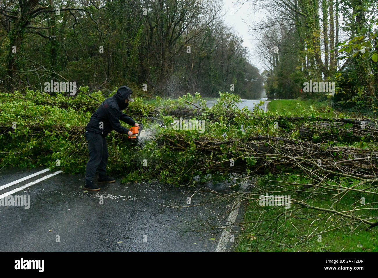 Dorchester, Dorset, UK. 2nd Nov, 2019. UK Weather. A workman begins to cut up a tree which was brought down by stormy winds across the A35 near Dorchester in Dorset. Picture Credit: Graham Hunt/Alamy Live News Stock Photo