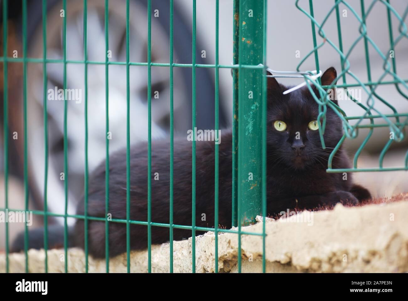cat-2A7PE3N.jpg