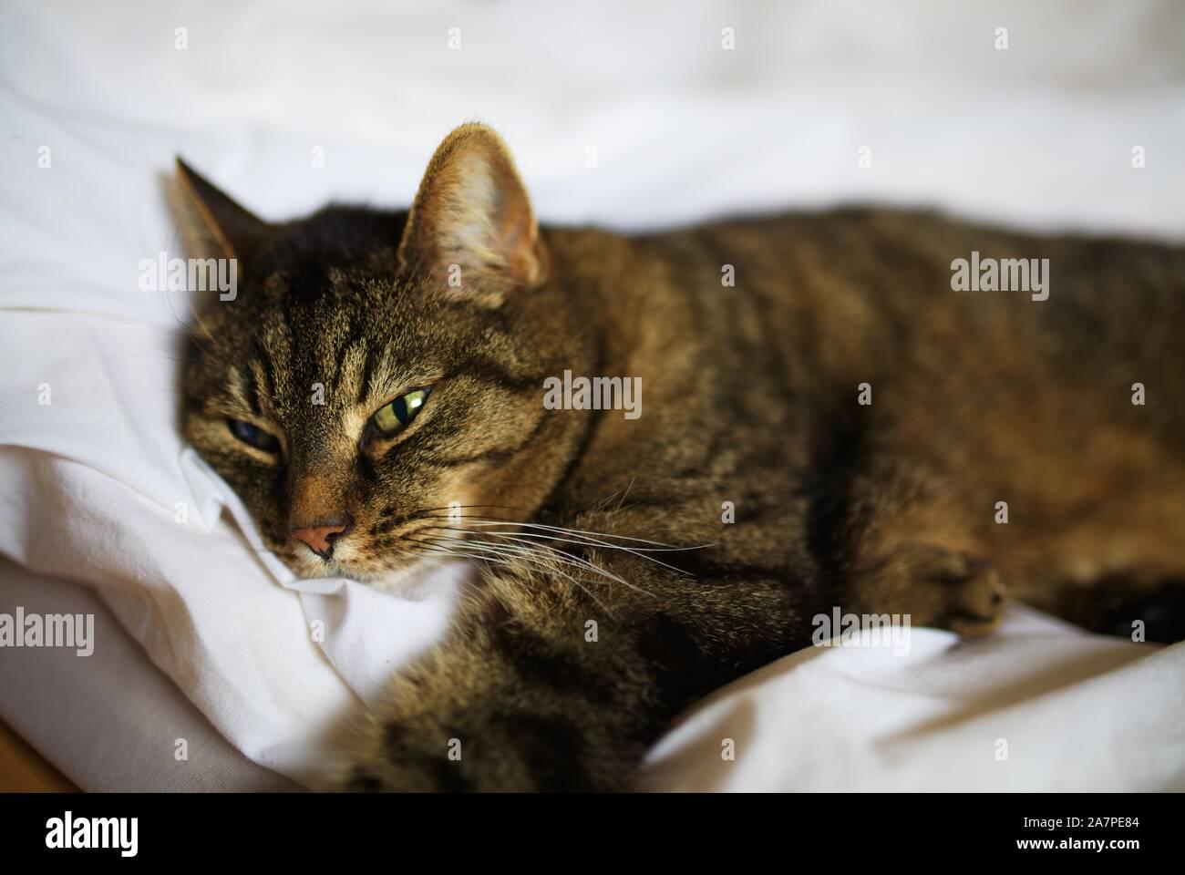 cat-2A7PE84.jpg