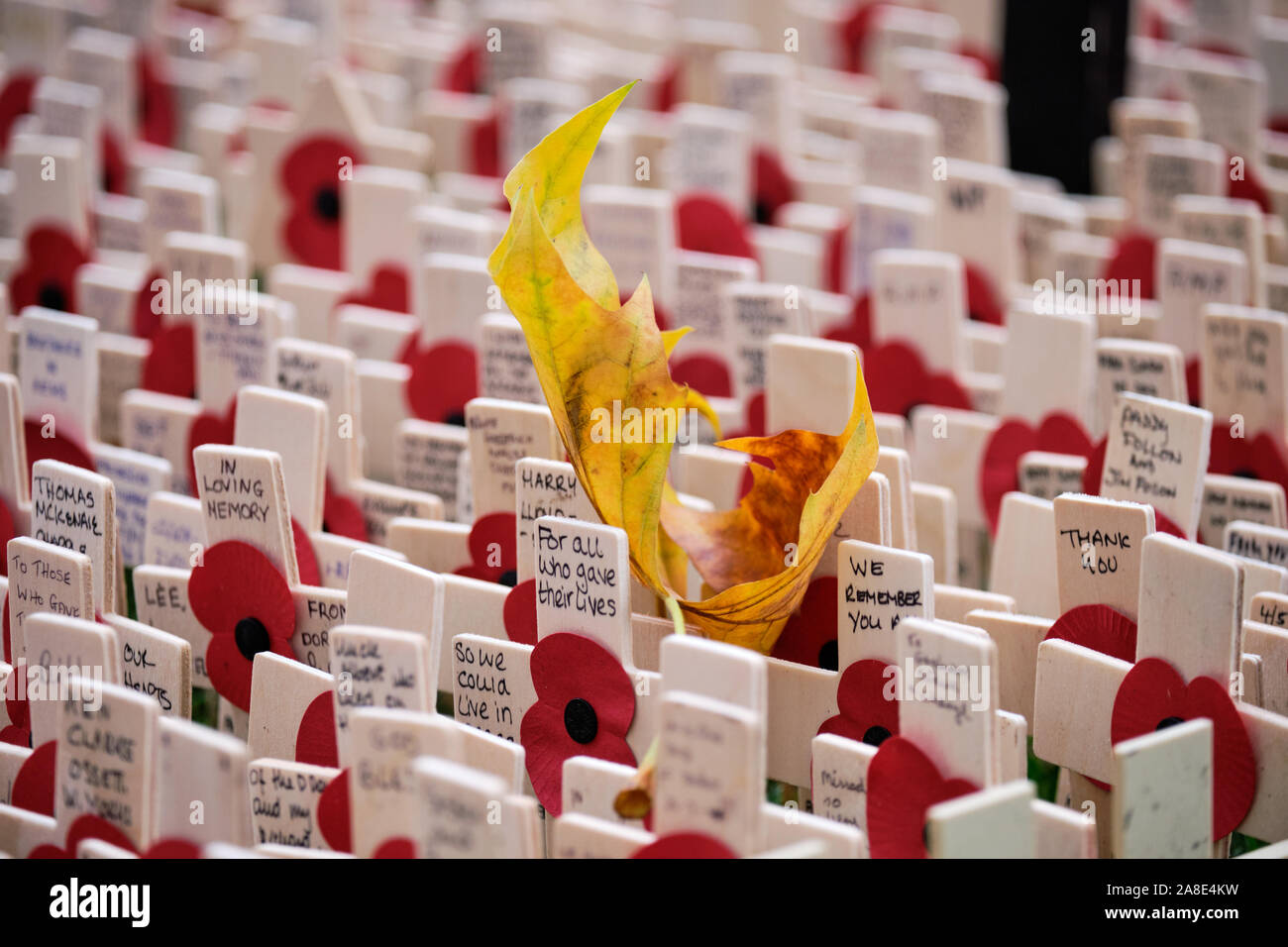 westminster-london-uk-8th-november-2019-people-coming-to-pay-tribute-to-fallen-soldiers-at-the-field-of-remembrance-on-westminster-abbey-grounds-now-open-to-the-general-public-fallen-yellow-leaf-fallen-in-rows-of-memorial-crosses-with-inscriptions-and-poppies-the-field-will-remain-open-until-the-18th-of-november-credit-jf-pelletier-alamy-live-news-2A8E4KW.jpg