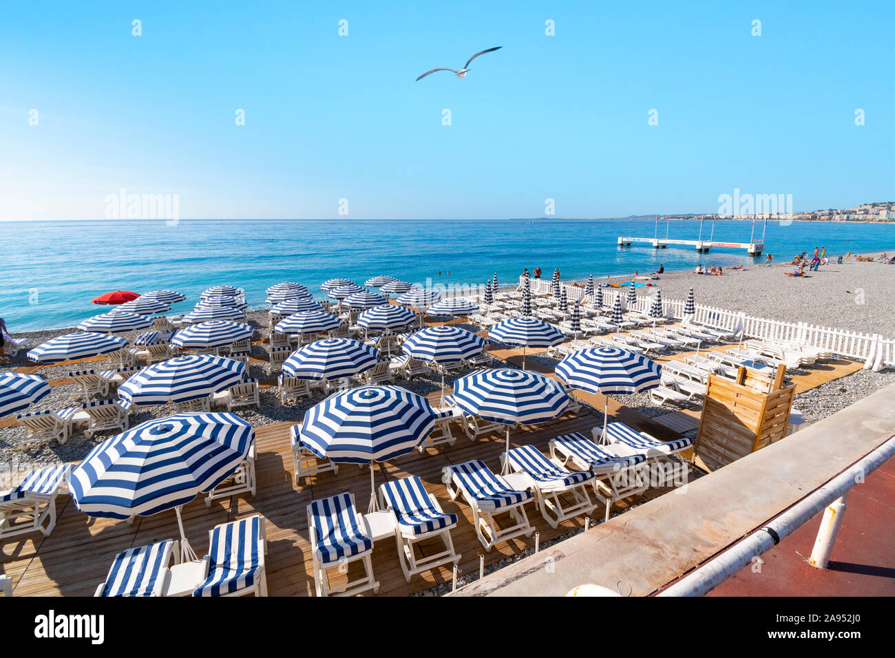 a-seagull-flies-over-the-lounge-chairs-at-a-resort-on-the-beach-at-the-bay-of-angels-on-the-french-riviera-in-nice-france-2A952J0.jpg