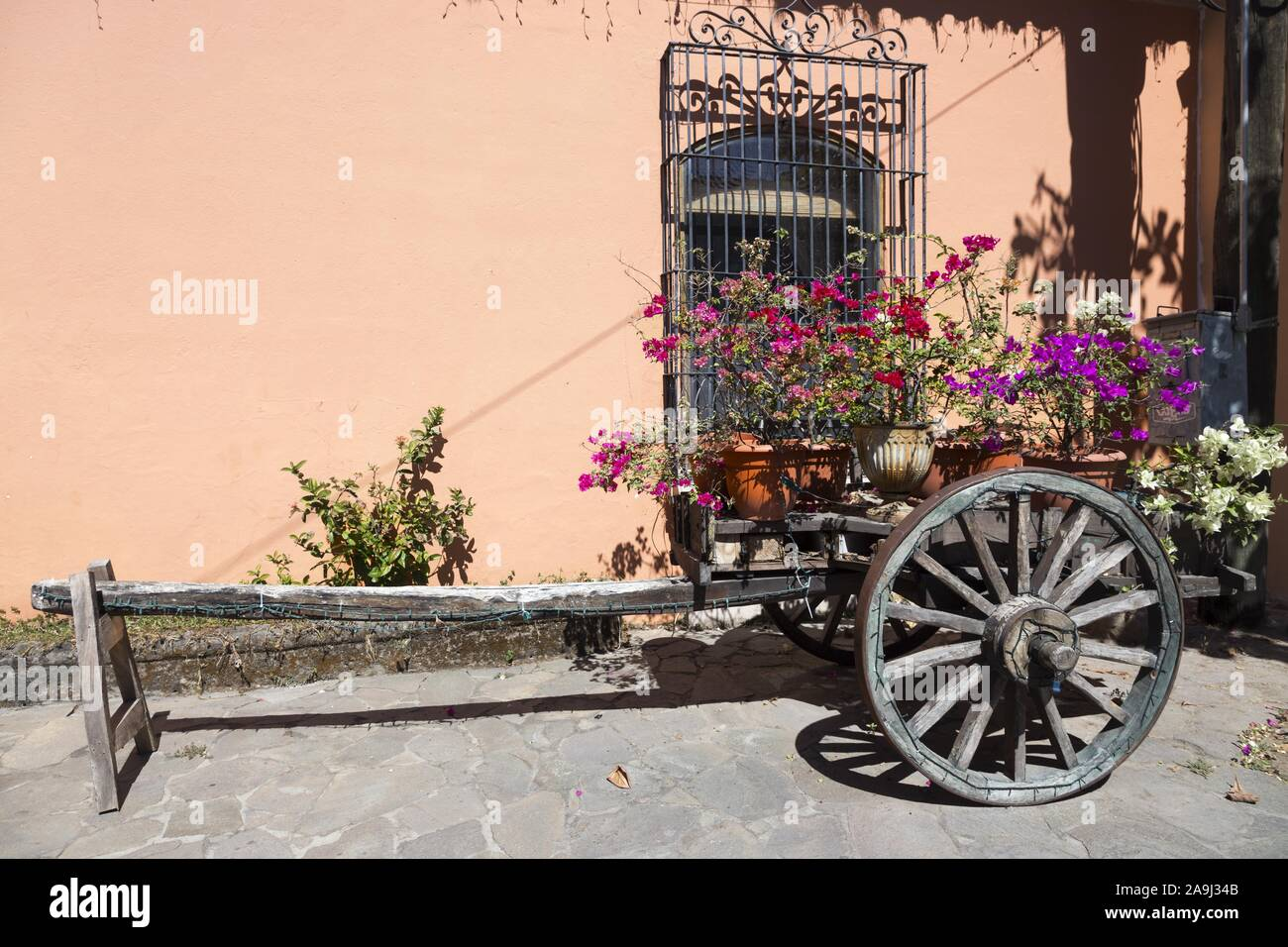 old-wooden-cart-with-wild-roses-flower-b