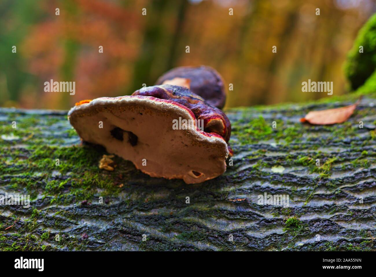 Luxembourg, Mellerdall, Hiking Path W2 Stock Photo