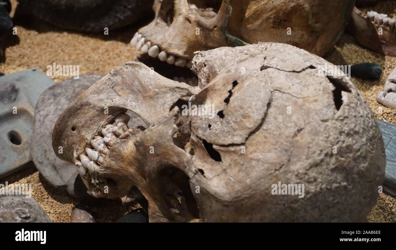 skulls-at-templo-mayor-from-aztec-sacrifical-victims-excavated-at-this-archeological-site-in-zcalo-mexico-city-2AAB6EE.jpg