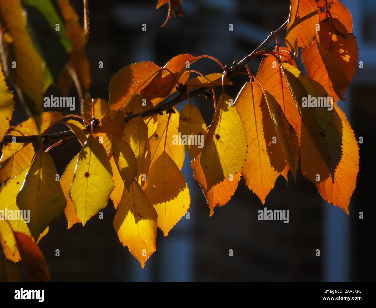 sunshine-through-autumn-leaves-2AAEXPE.jpg