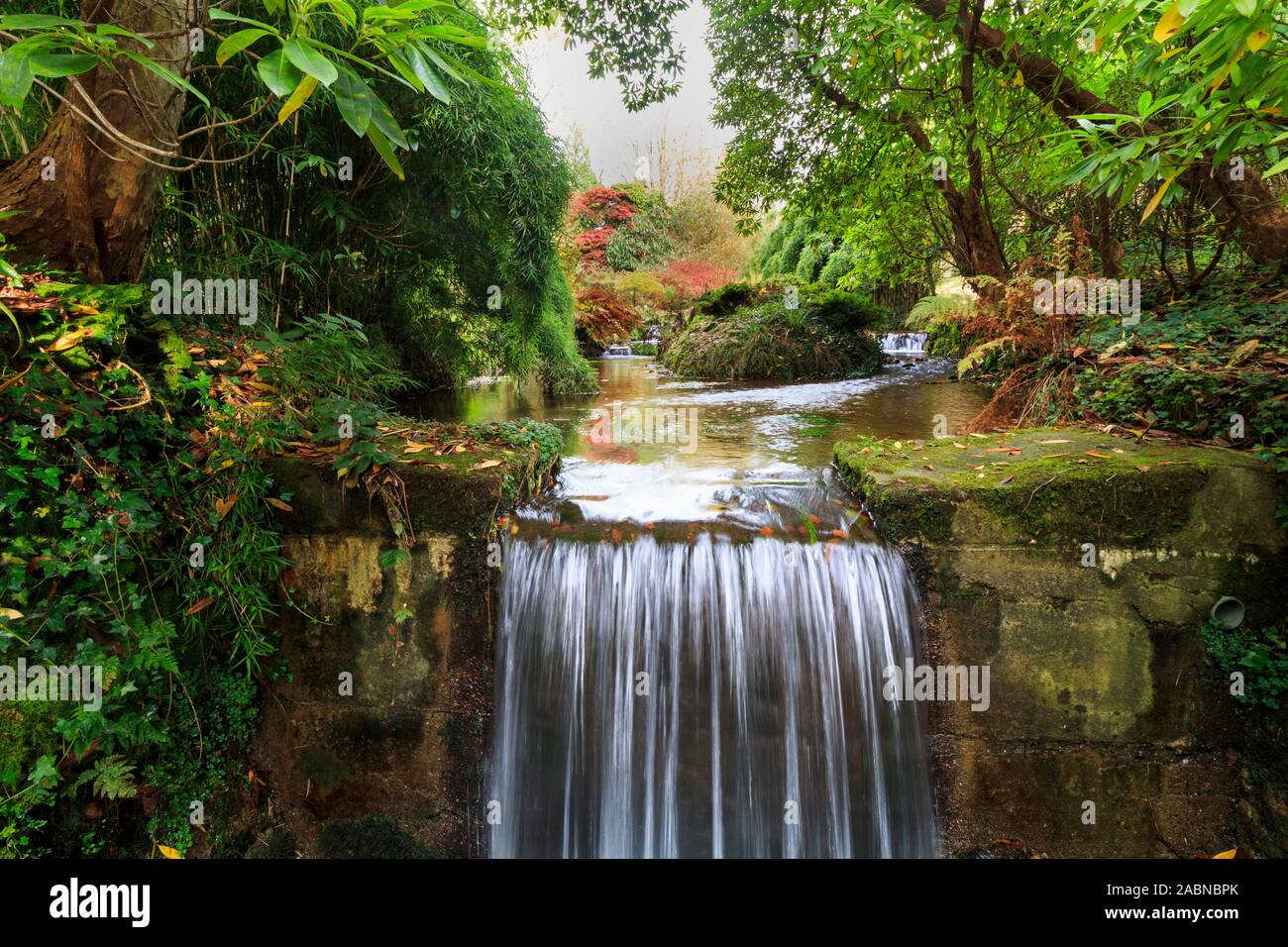 autumn-colour-and-cascades-on-the-addenbrook-at-lukesland-gardens-2ABNBPK.jpg