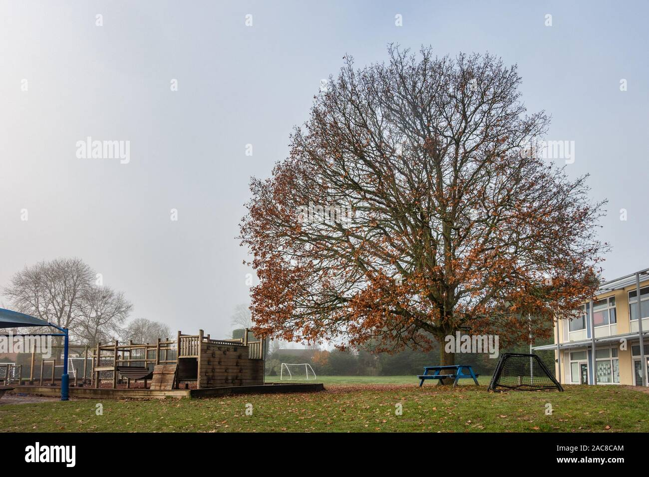 a-large-tree-in-a-school-playground-has-lost-most-of-its-leaves-at-the-end-of-autumn-or-early-winter-2AC8CAM.jpg