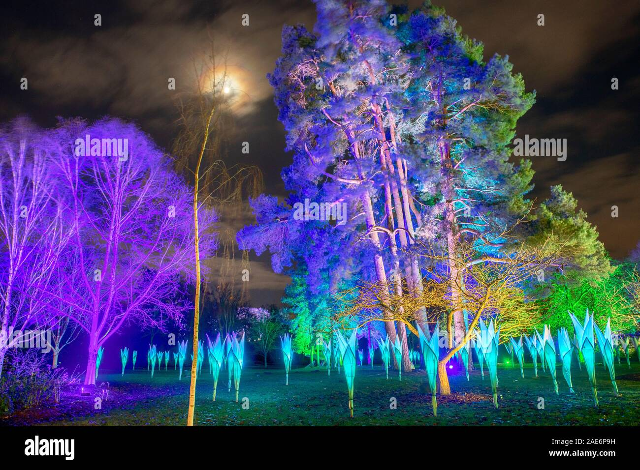 RHS Wisley, Surrey, UK. 6th December 2019. Enchanting trail with dazzling light installations themed around the four seasons all lit up at night during the festive season from 7 December 2019 - 5 January 2020. The ticketed event has sold out in advance. Credit: Malcolm Park/Alamy. Stock Photo