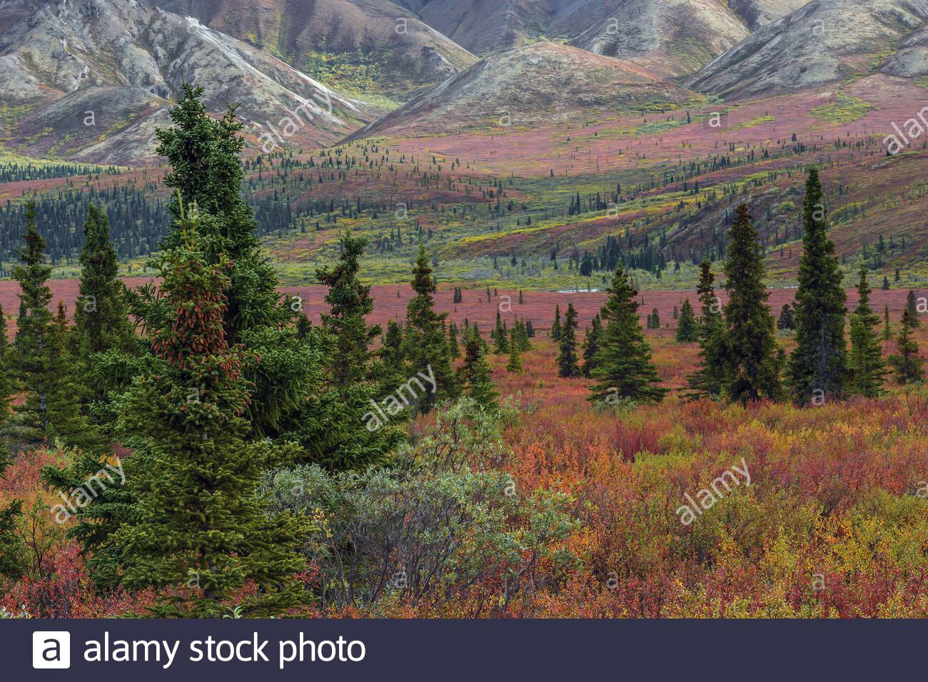 denali-national-park-in-alaska-usa-fall-