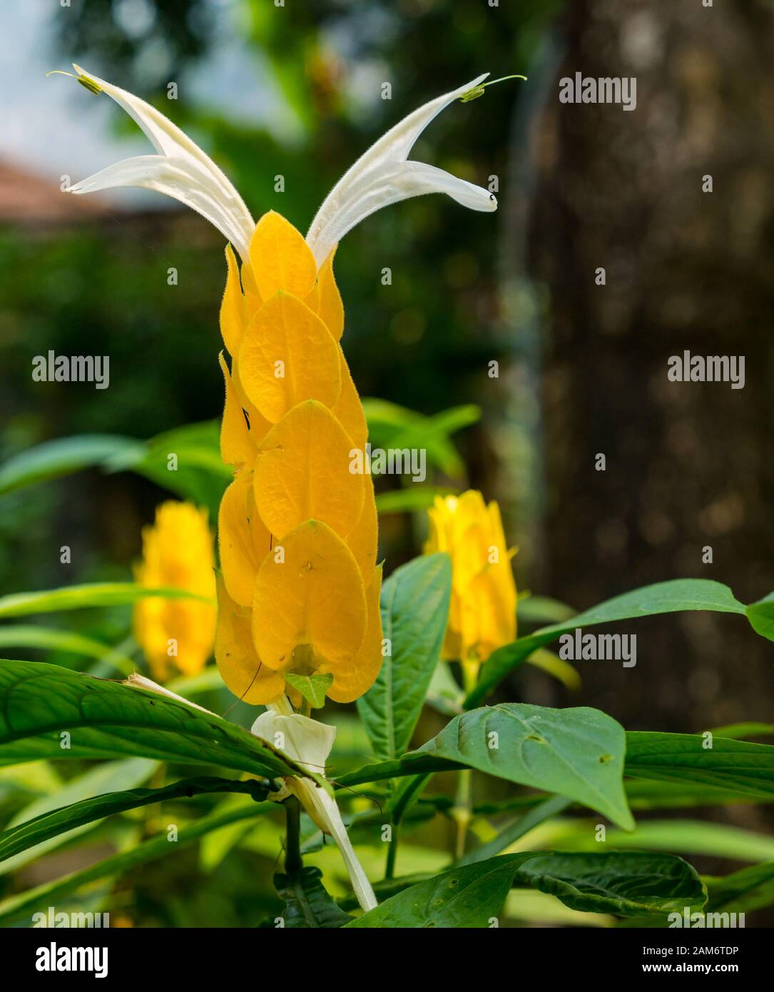 close-up-of-yellow-flower-tam-coc-ninh-b