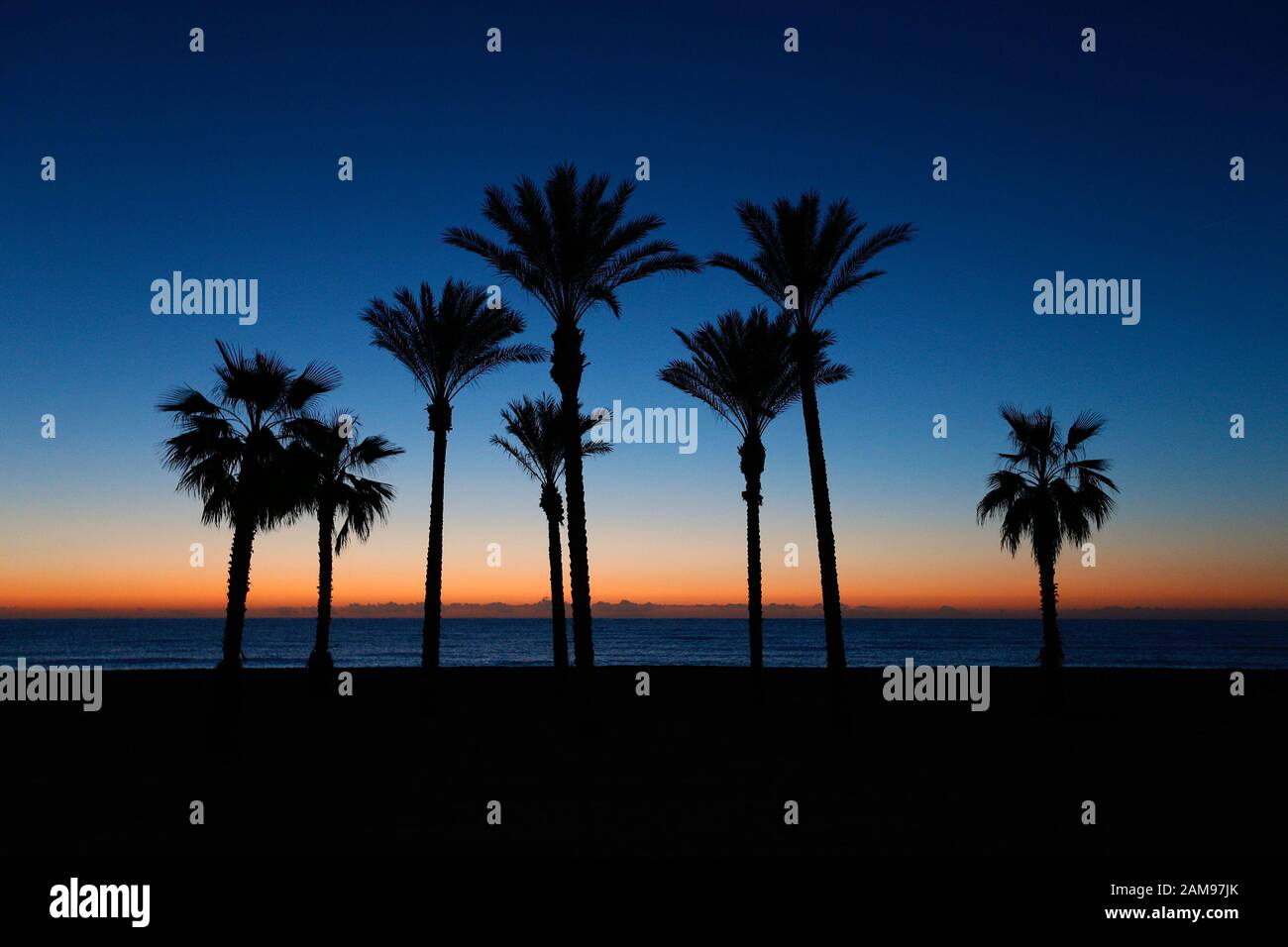 Roquetas de Mar, Almeria, Spain. 12 Jan, 2020. Dawn breaks over the horizon where Palm trees on the beach look out over the Mediterranean Sea. ©Paul Lawrenson 2019, Photo Credit: Paul Lawrenson/Alamy Live News Stock Photo