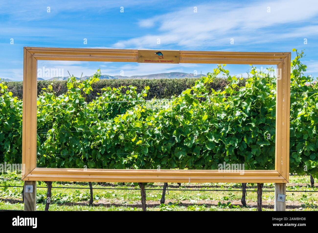 giant-picture-frame-with-a-view-of-admiral-hill-margrain-vineyard-martinborough-wairarapa-new-zealand-2AMBHD8.jpg