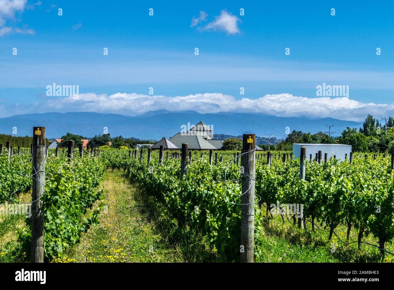 margrain-vineyard-martinborough-wairarapa-new-zealand-2AMBHE3.jpg