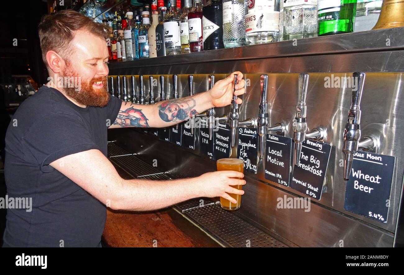 Edinburgh,HotpixUK,@HotpixUK,GoTonySmith,beard,beardo,man with beard,pulling a pint,in a,craft beer bar,craft beer pub,tap,taps,wheat beet,IPA,with many,craft,pint glass,glass,2/3,of a pint,half,pint,high alcohol,beer,high duty,brewery,tax,popular,Local Motive,The Big Breakfast,regional,brewing,ginger,smiling,bartender