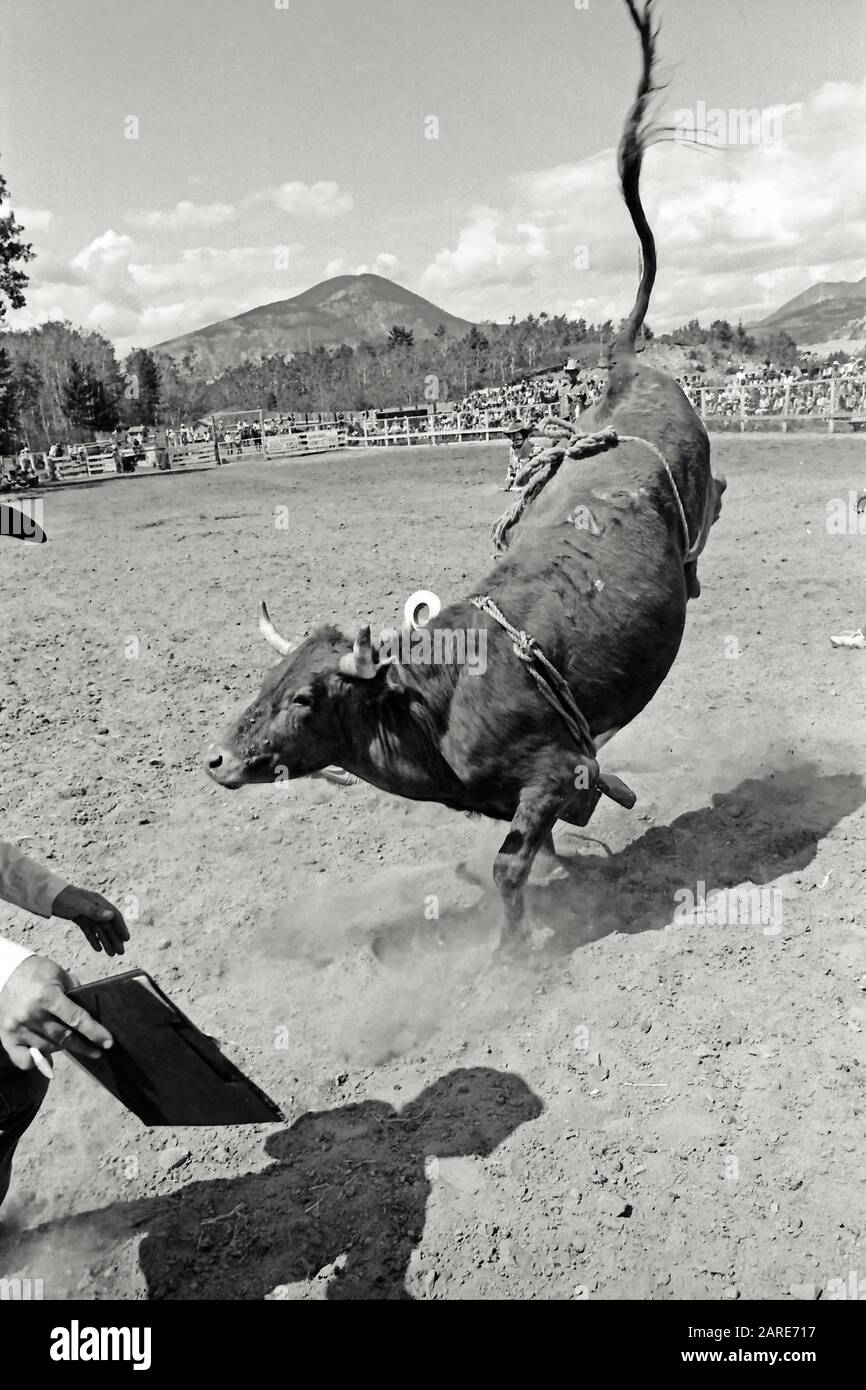 Rodeo judge with a clipboard during a bull riding event at the Crowsnest Pass Rodeo, Alberta Canada. Circa 1982 Stock Photo