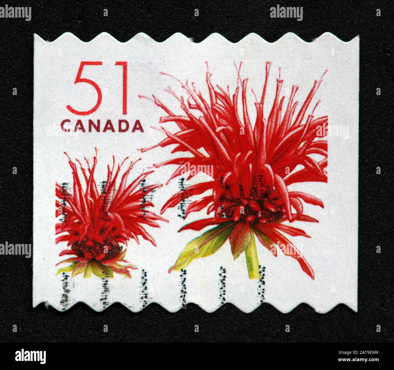 Hotpixuk,@Hotpixuk,GoTonySmith,stamp,postal,franked,frank,used stamps,used franked,used,franked stamp,from envelope,history,historic,old,poste,post office,communications,postage,sending letters,sending,parcels,Canada,51,51cents,red flower,51c,red,flower,Red bergamot,blossom,Canada 51c,Canadian