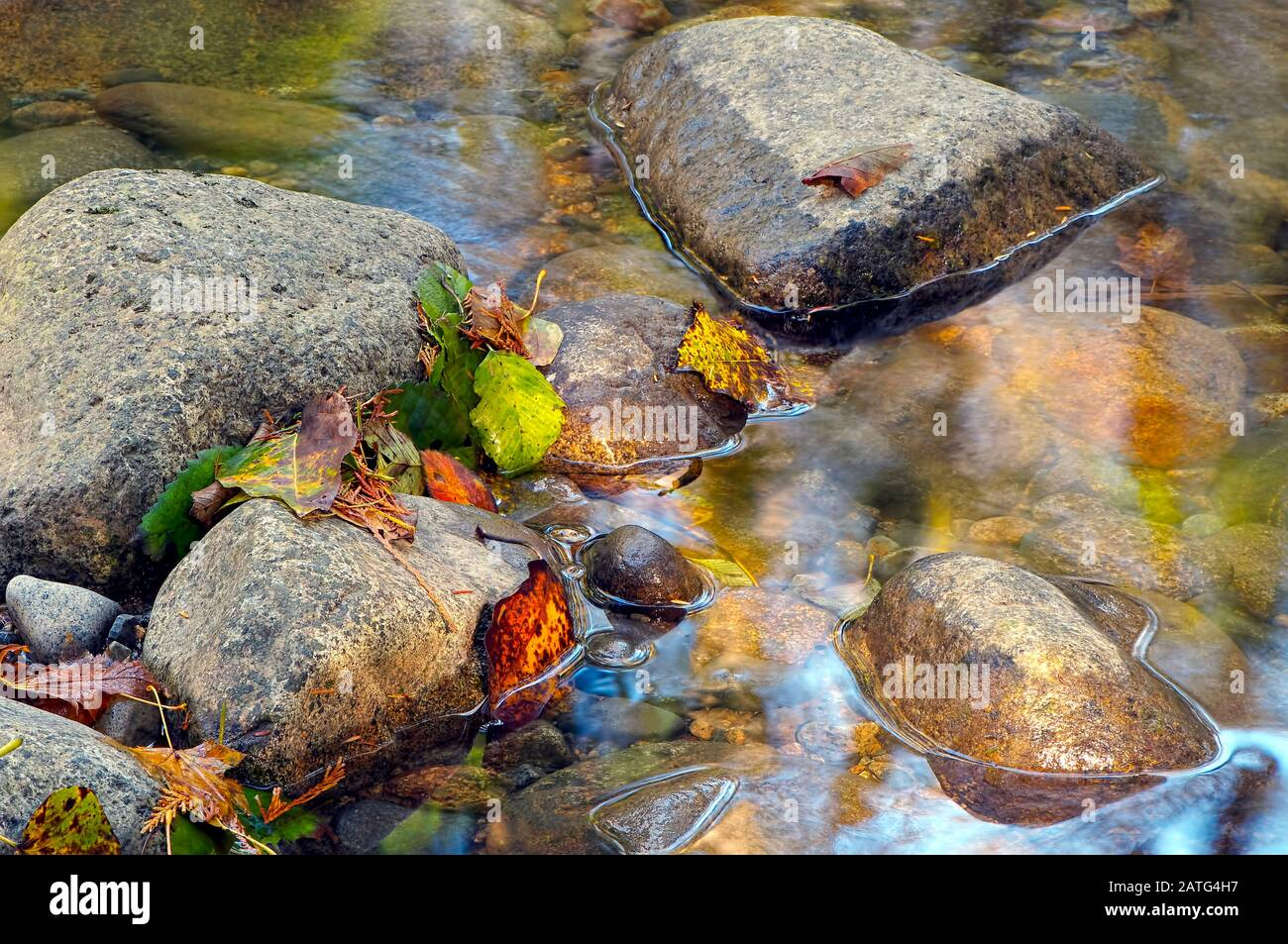 colourful-fallen-leaves-and-needles-on-rocks-in-a-creek-2ATG4H7.jpg