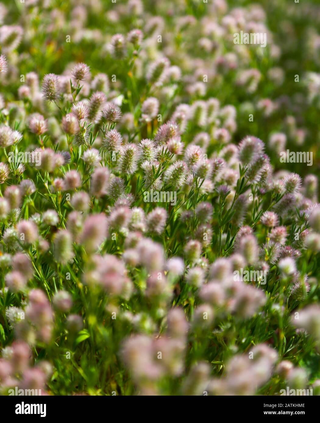 wild-flowers-croatia-2ATKHME.jpg