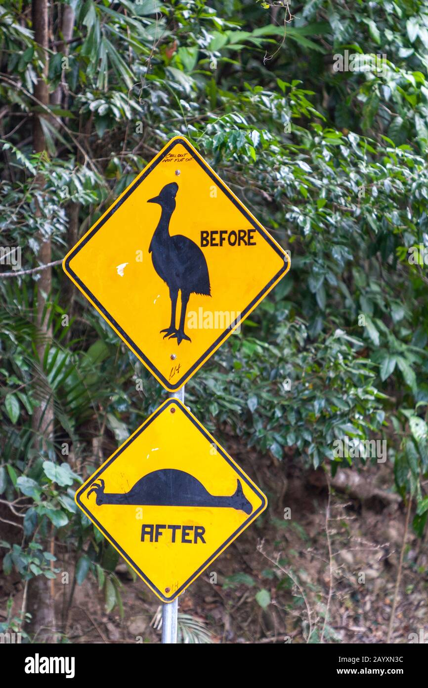 Casuarius (Cassowary) caution road sign in Cape Tribulation Rd,  Daintree National Park, Queensland, Australia Stock Photo
