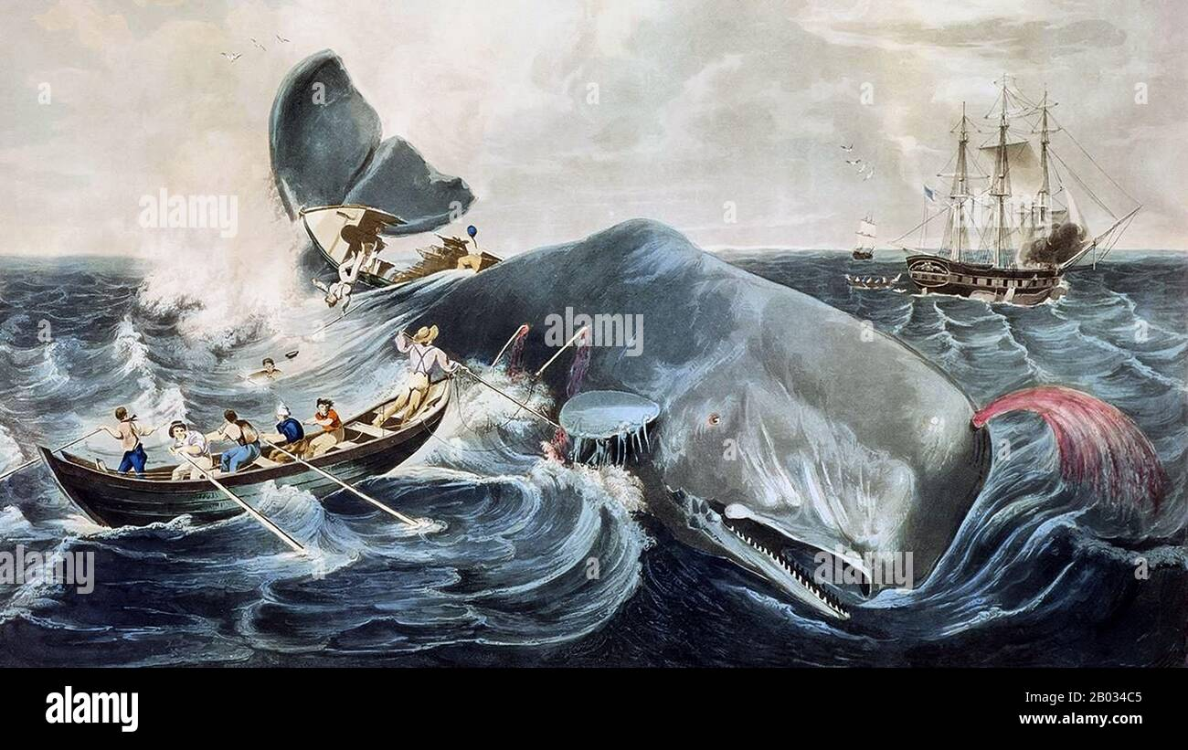 In addition to Herman Melville's own experience on the whaling ship Acushnet, two real events served as the genesis for his Moby Dick. One was the sinking of the Nantucket ship Essex in 1820, after a sperm whale rammed her 2,000 miles (3,200 km) from the western coast of South America.  The other event was the alleged killing in the late 1830s of the albino sperm whale Mocha Dick, in the waters off the Chilean island of Mocha. Mocha Dick was rumored to have 20 or so harpoons in his back from other whalers, and appeared to attack ships with premeditated ferocity. Stock Photo