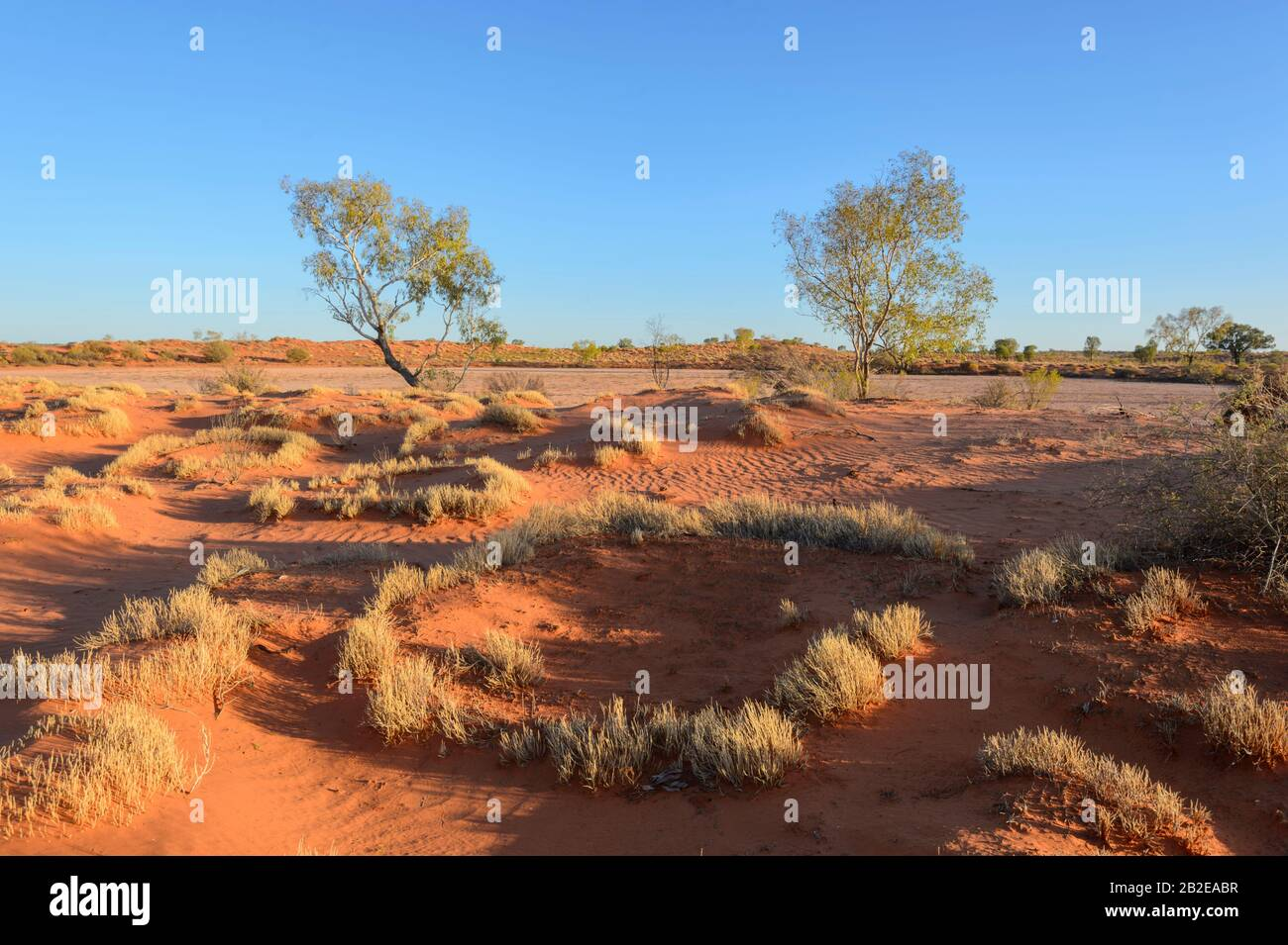 Circular spinifex growing in the Outback near Alice Springs, Northern Territory, NT, Australia Stock Photo