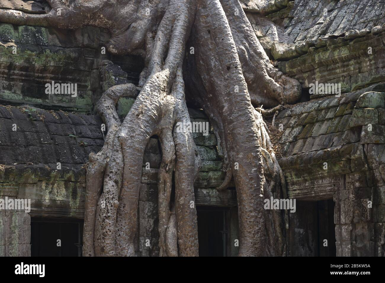 massive-tree-roots-growing-from-ancient-