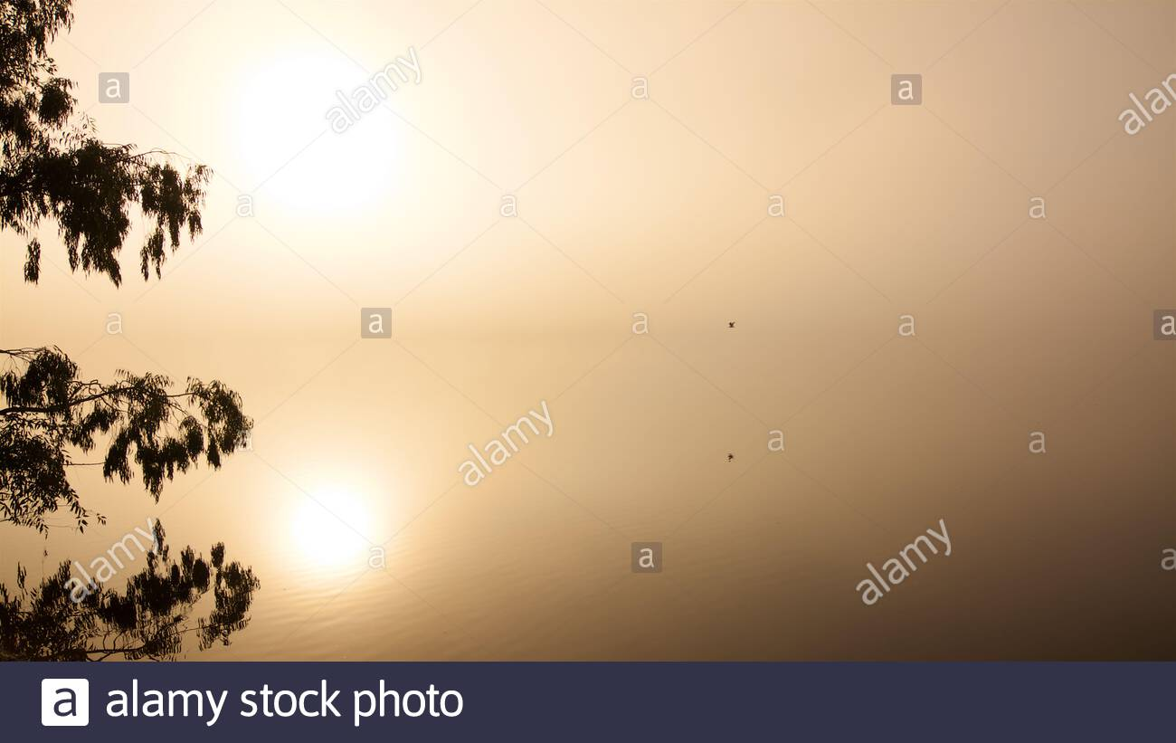 fog-on-bibra-lake-shortly-after-sunrise-with-a-tree-in-silhouette-a-bird-in-flight-and-the-sun-reflected-on-the-surface-perth-western-australia-2B7WCKR.jpg