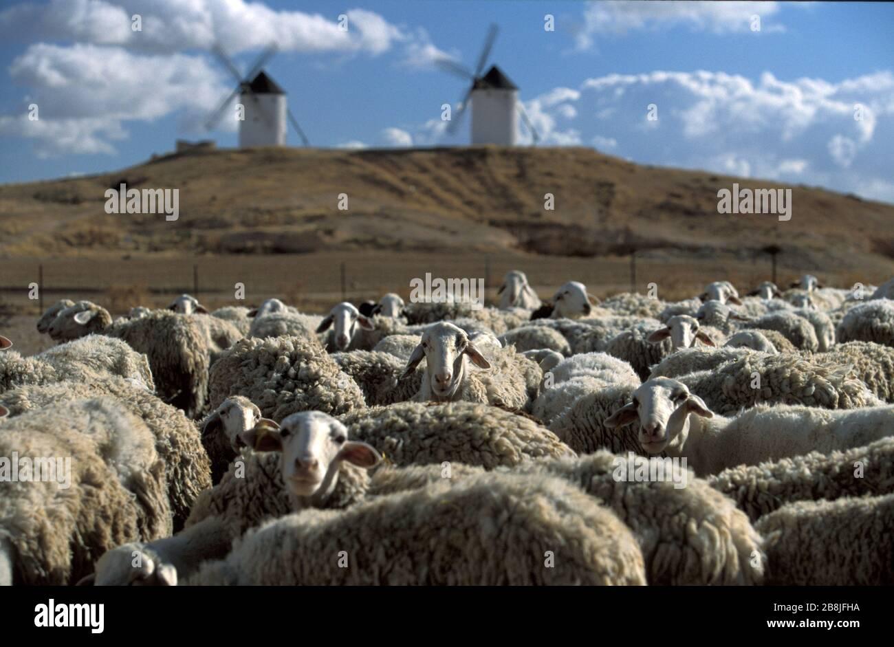 flock-of-sheep-in-a-castilian-landscape-