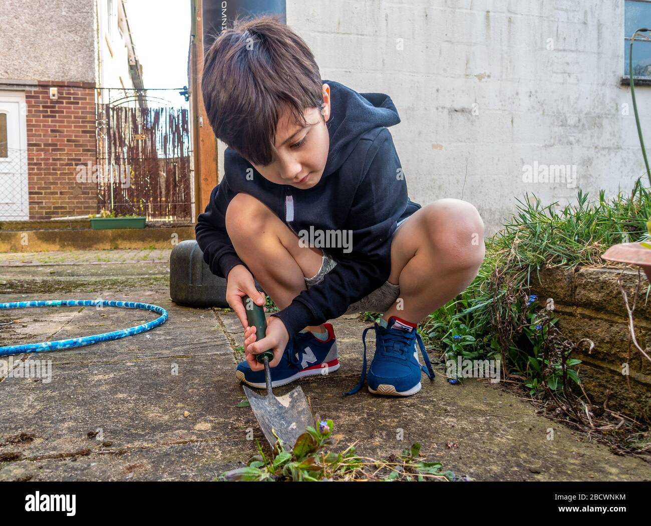 a-young-boy-digging-up-weeds-using-a-hand-trowel-in-the-garden-2BCWNKM.jpg