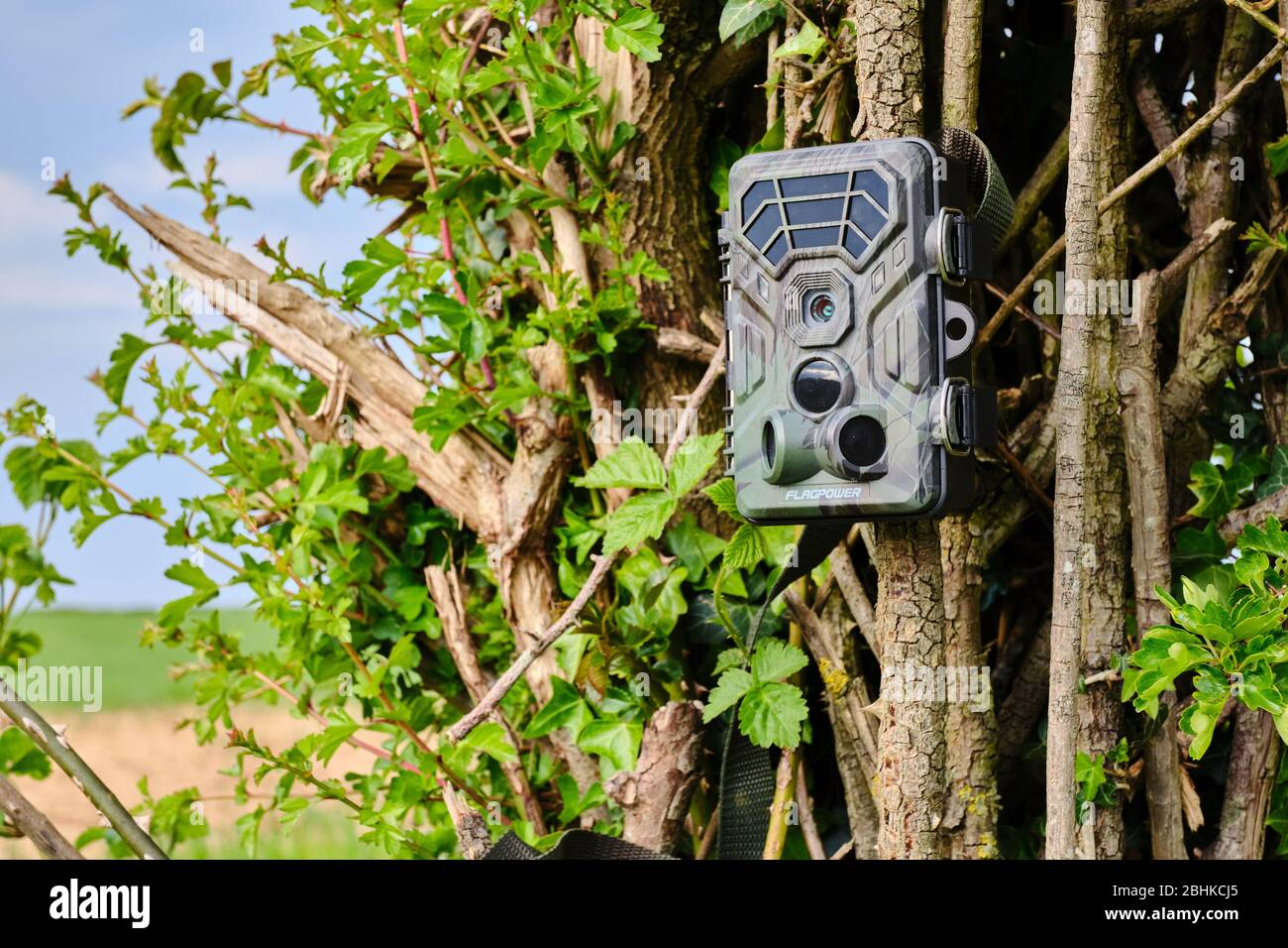 camera-trap-or-trail-cam-set-up-on-a-hed