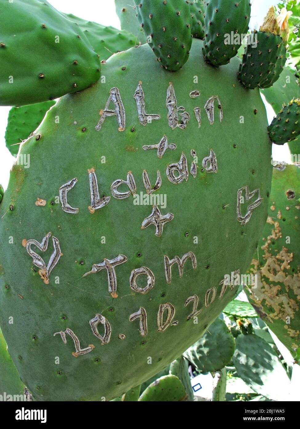 Gotonysmith,Hotpixuk,@Hotpixuk,Spain,Loz,2k11,on cactus,Espana