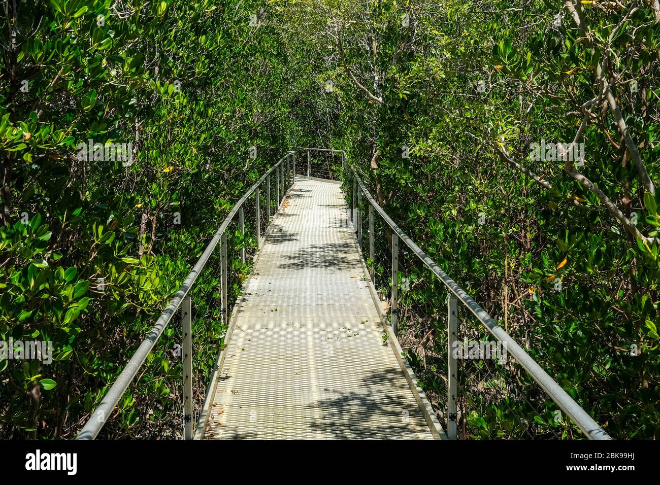 the-mangrove-forest-board-walk-at-east-p