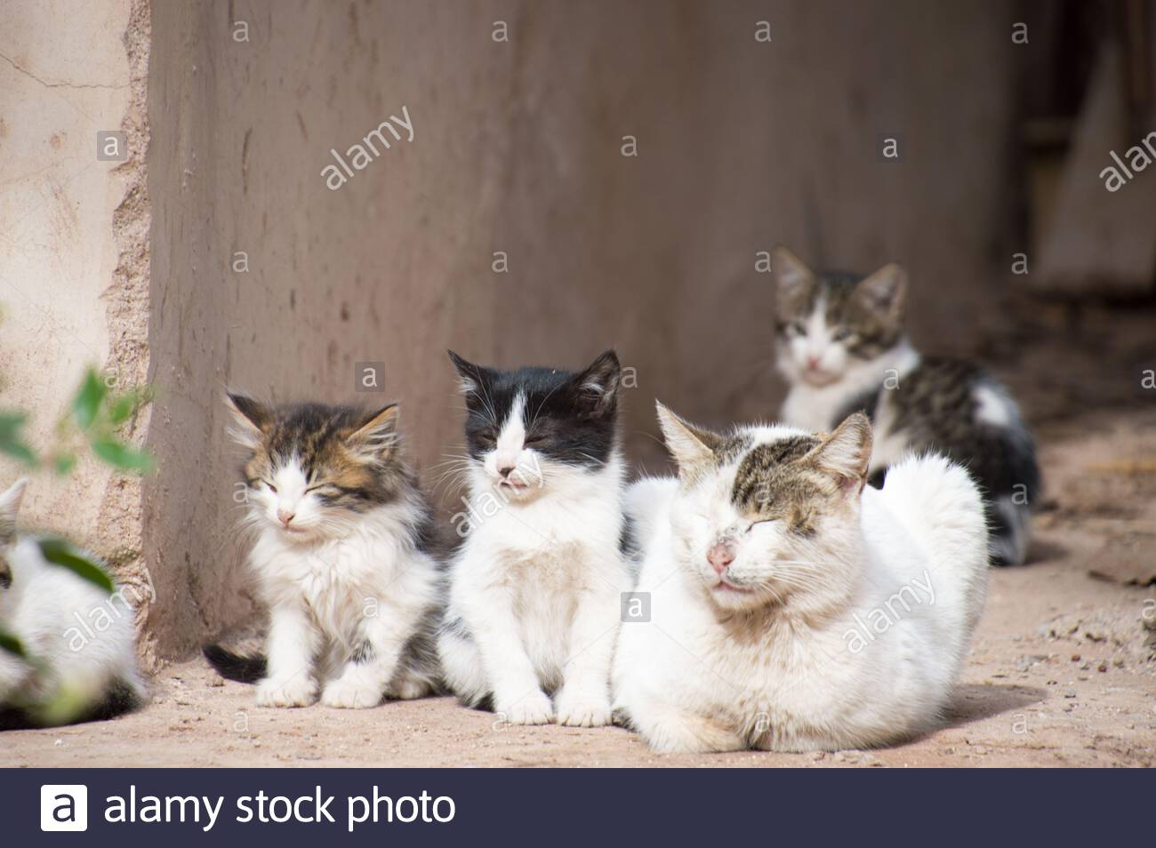 a-grown-cat-and-kittens-on-the-streets-of-marrakesh-marrakech-2BKB4GT.jpg
