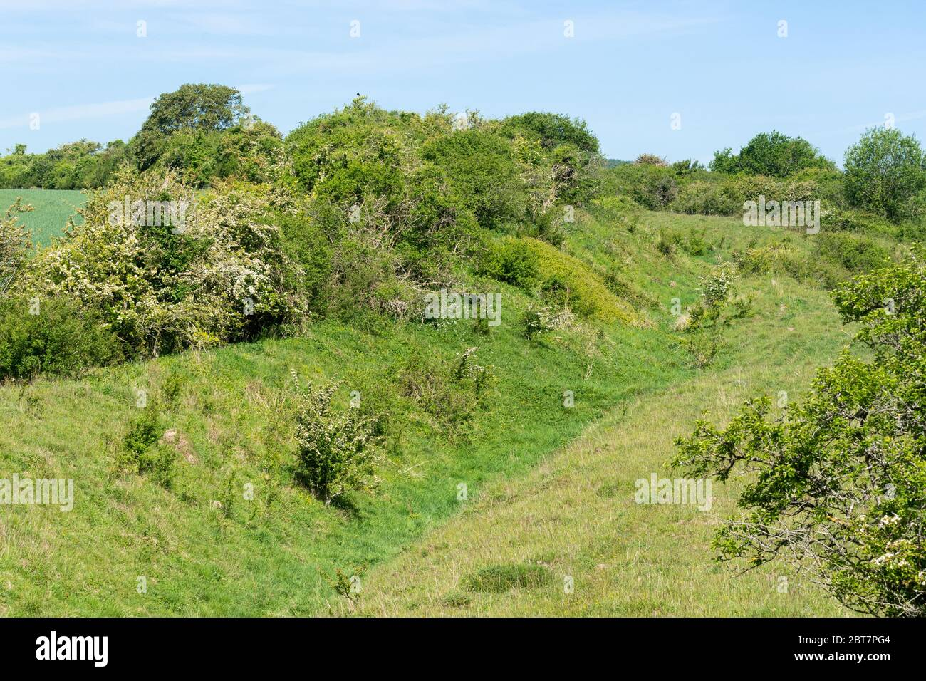 martin-down-national-nature-reserve-chalk-downland-landscape-in-hampshire-england-uk-with-the-bokerley-dyke-ditch-a-historic-linear-earthwork-2BT7PG4.jpg