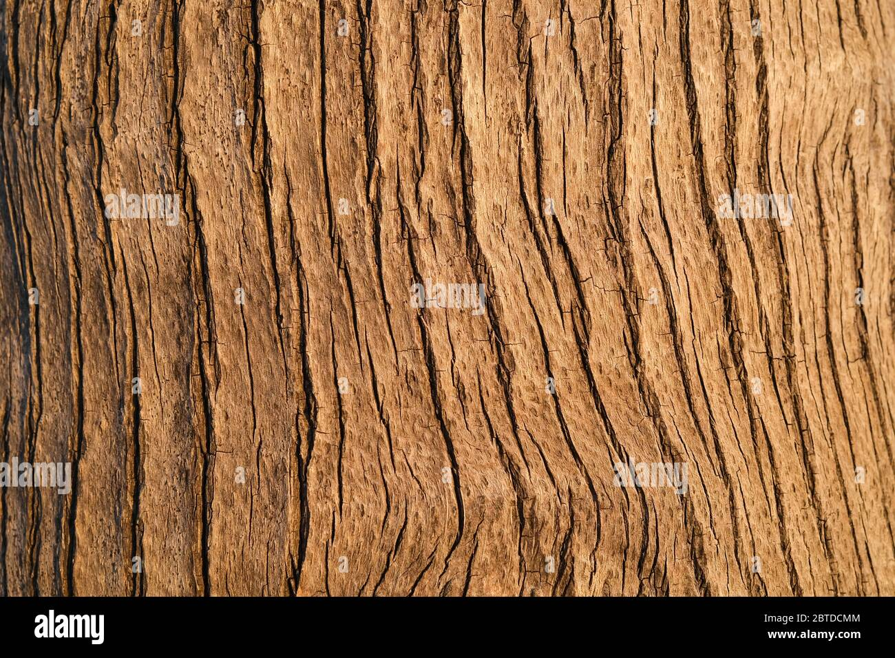 the-cracked-and-textured-bark-of-a-palm-