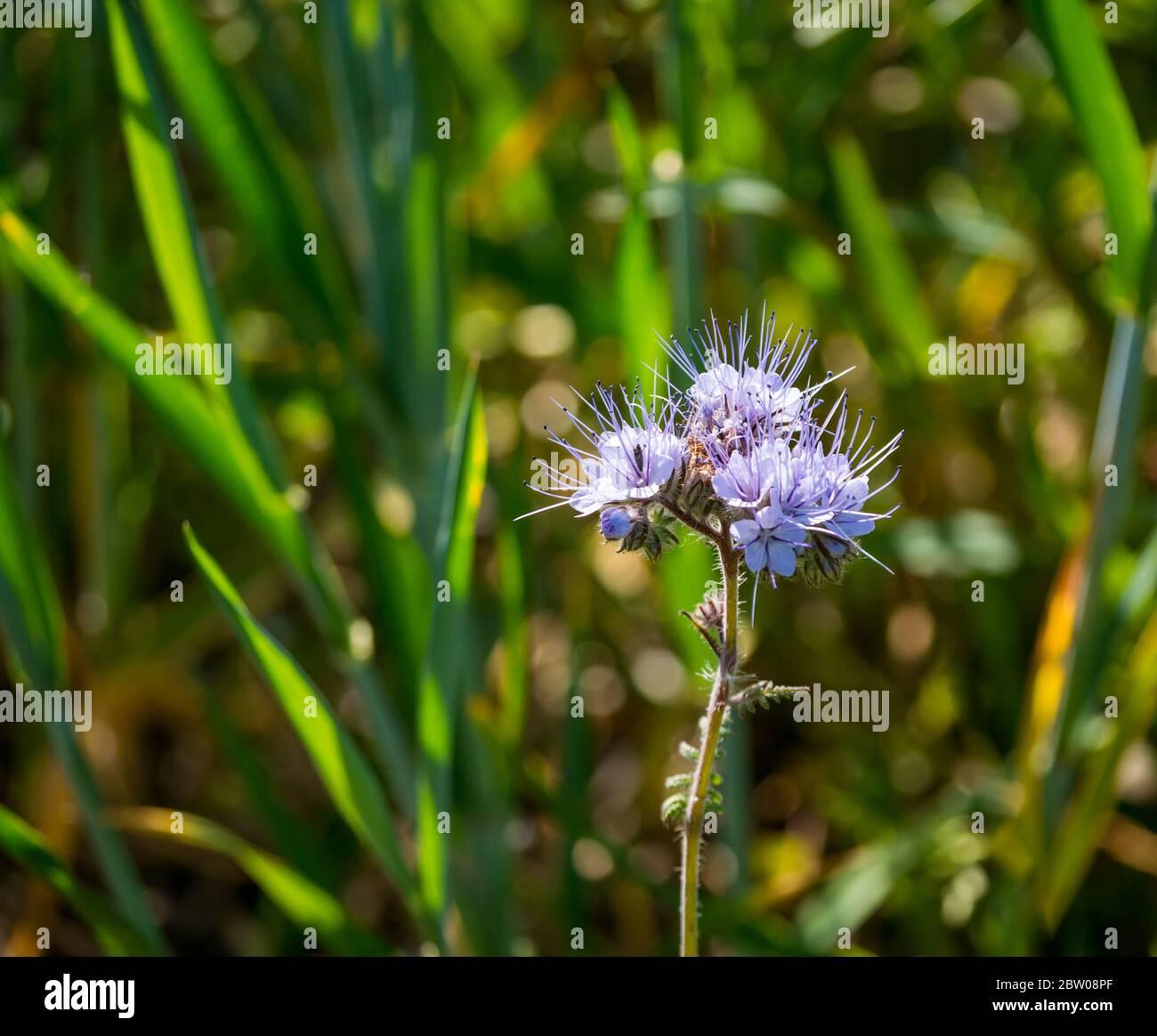 pretty-sunlit-purple-flowers-growing-in-