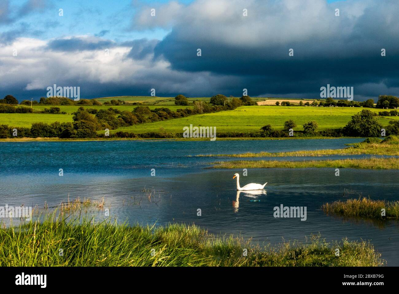 timoleague-west-cork-ireland-6th-june-2020-a-swan-swims-at-high-tide-in-timoleague-as-dark-clouds-loom-overhead-ireland-is-experiencing-high-tides-due-to-the-waning-gibbous-moon-which-is-99-illuminated-tonight-credit-ag-newsalamy-live-news-2BXB79G.jpg