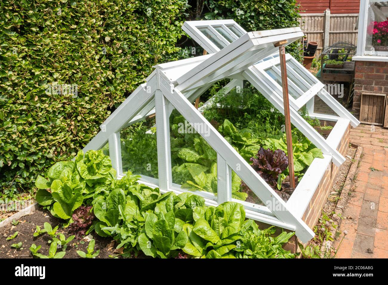 lettuces-and-other-salad-leaf-plants-growing-in-a-cold-frame-in-a-garden-in-june-uk-2C06A8G.jpg