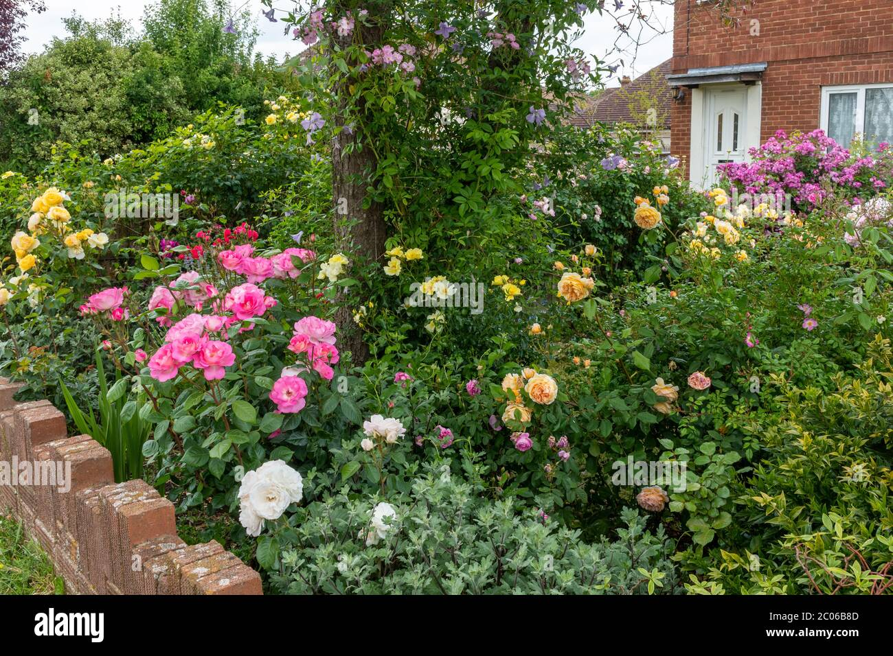 variety-of-colourful-colorful-roses-in-a-front-garden-during-june-uk-2C06B8D.jpg