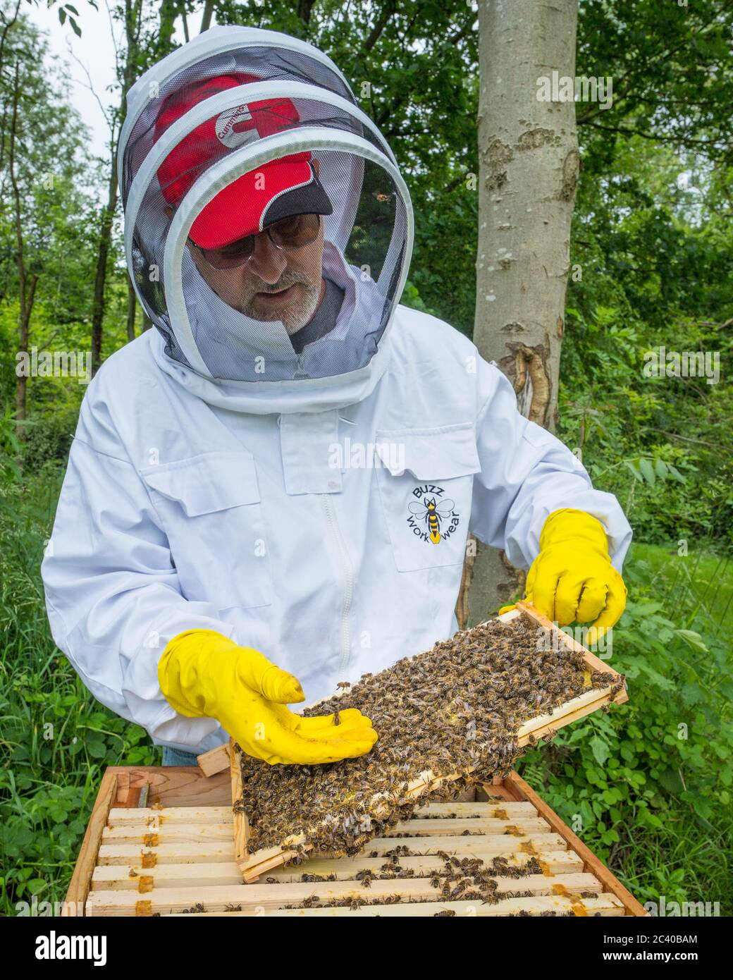 A bee keeper examines a frame from his hive. Stock Photo