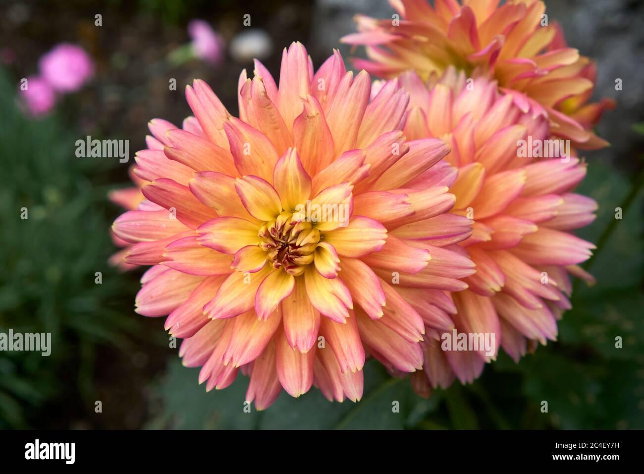 unkown-flower-2C4EY7H.jpg