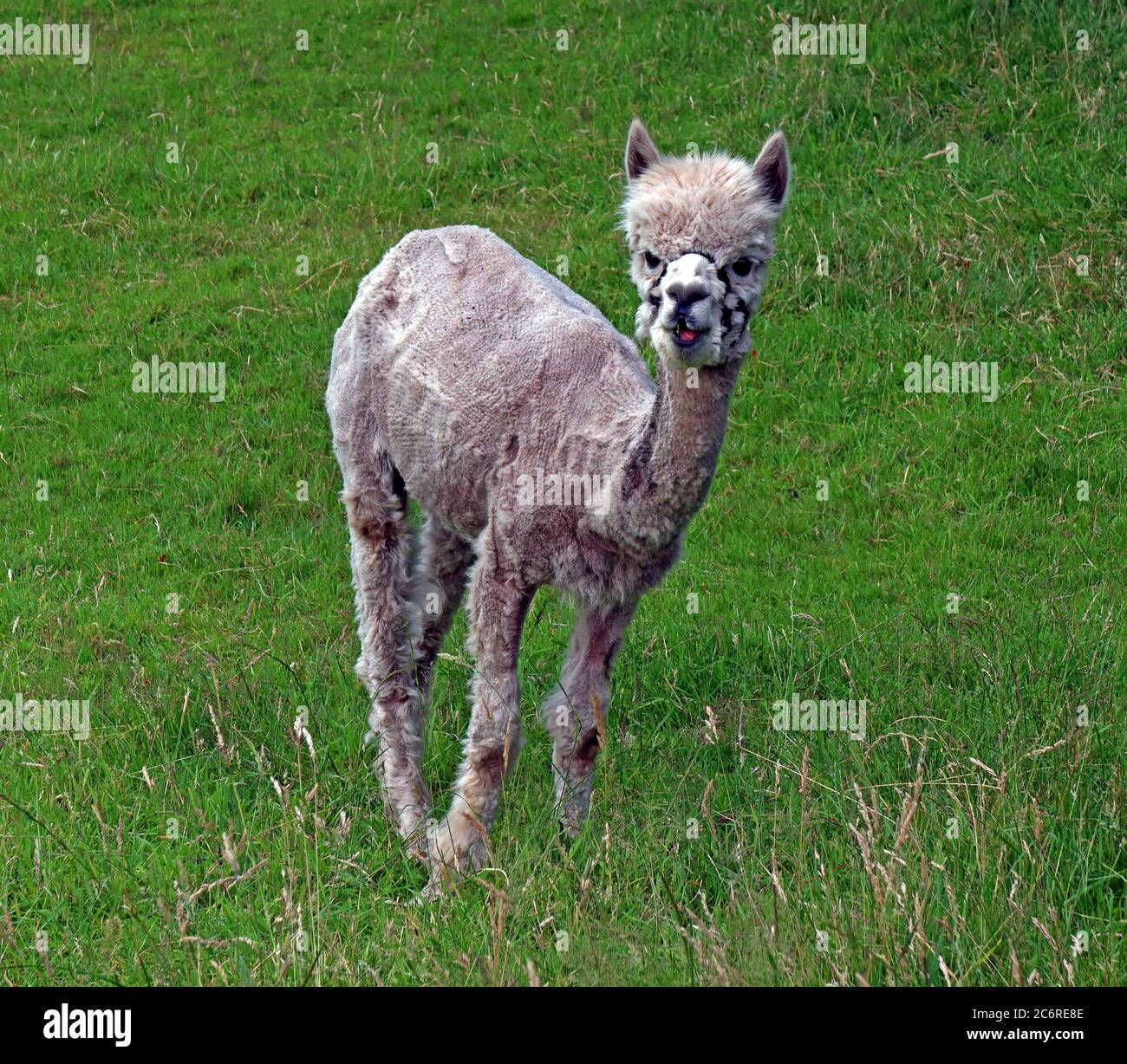 GoTonySmith,HotpixUK,@HotpixUK,England,UK,Warrington,Grappenhall,Uk,farmer,farming