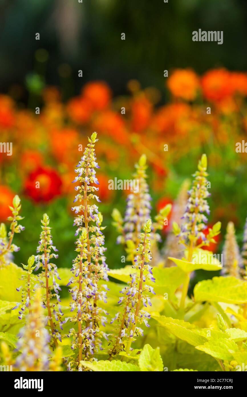 plants-outdoor-2C77CRJ.jpg